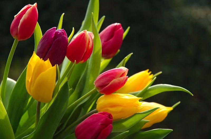 Florist in Oakleigh (AZ033)