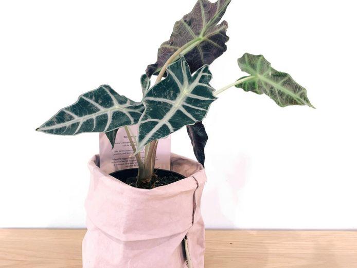 florist-home-based-established-lifestyle-business-1