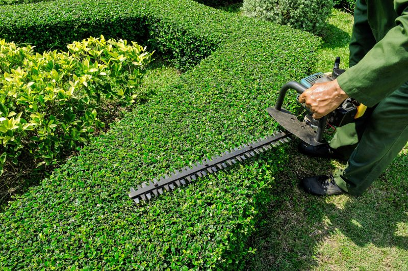 Hedge Trimming business with a strong clientele base.