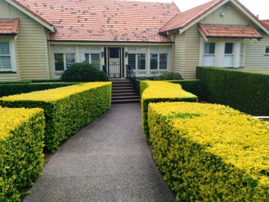 hedge-trimming-business-with-a-strong-clientele-base-3