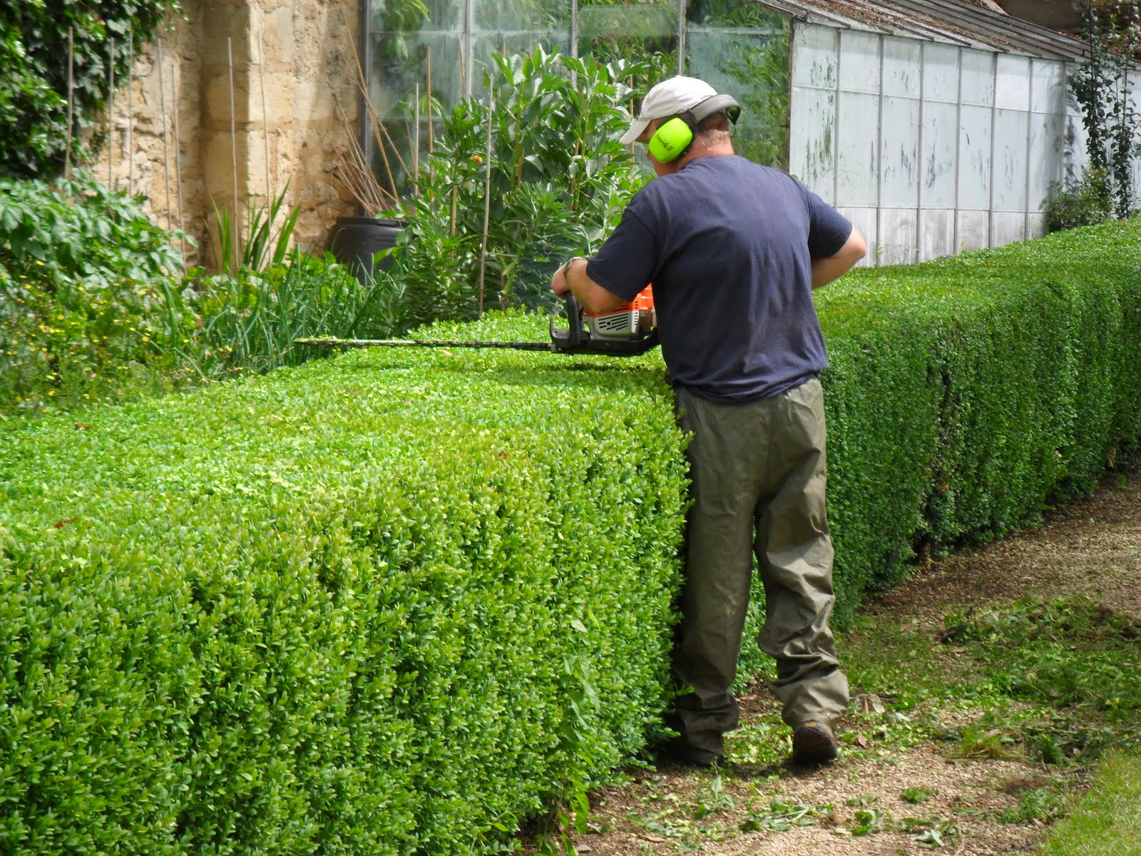 hedge-trimming-business-with-a-strong-clientele-base-1