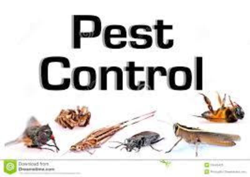 Lucrative Pest Control Business for Sale: Our Ref (T543)