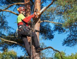 Tree Maintenance & Management Services